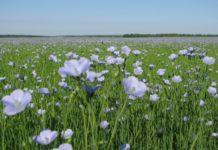 В Смоленской области прошел Всероссийский день льняного поля