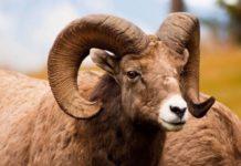 В текущем году экспорт баранины впервые существенно превысил импорт