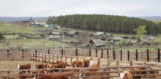 Реорганизация крестьянского фермерского хозяйства
