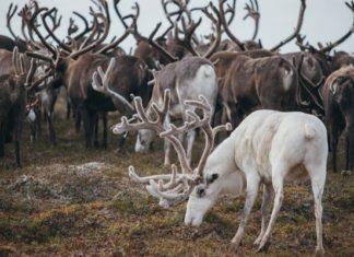 Агробизнес в северных широтах России