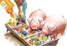 Американские фермы использовали антибиотики в течение года после введения ограничений