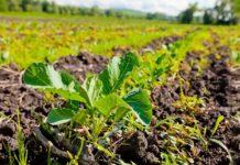 Биологизацию земледелия можно и нужно внедрять в промышленных масштабах