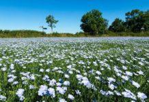 ЕБРР профинансирует белорусское льноводство