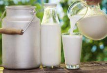Ekosem-Agrar в I полугодии увеличила выручку на 24%, нарастила долю переработки молока
