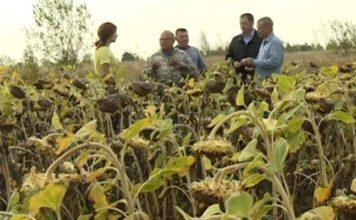 Иностранные инвесторы развивают аграрную отрасль Рязанской области