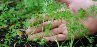 Как понять какие семена взойдут, а какие нет