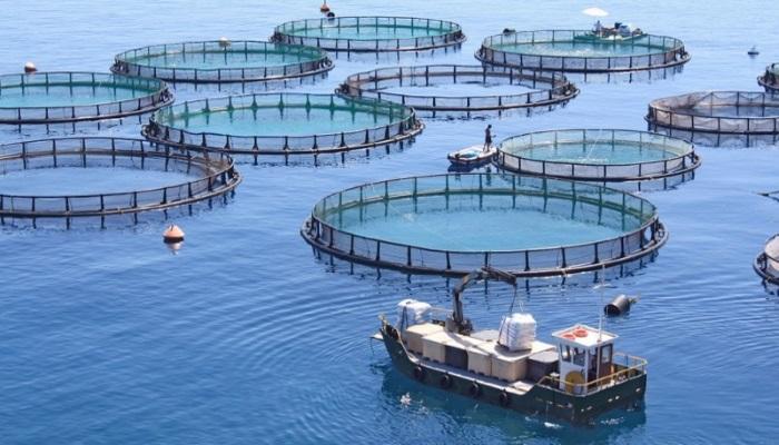 Китайская компания инвестирует в развитие аквакультуры в России около 40 млрд рублей