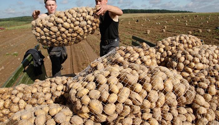 Кооперативы – корень сельской России