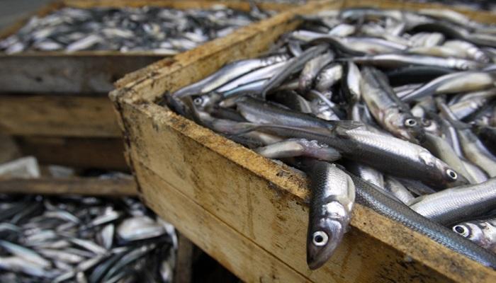 Медведев заявил о необходимости сохранения господдержки рыбохозяйственного комплекса