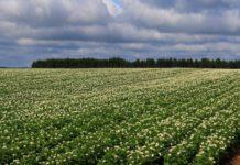 Минэкономразвития прогнозирует замедление роста сельхозпроизводства в РФ в 2018 г. до 1,1%