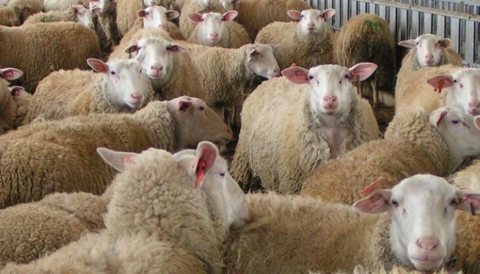 Минсельхоз: РФимеет всевозможности дляувеличения производства иэкспорта мяса