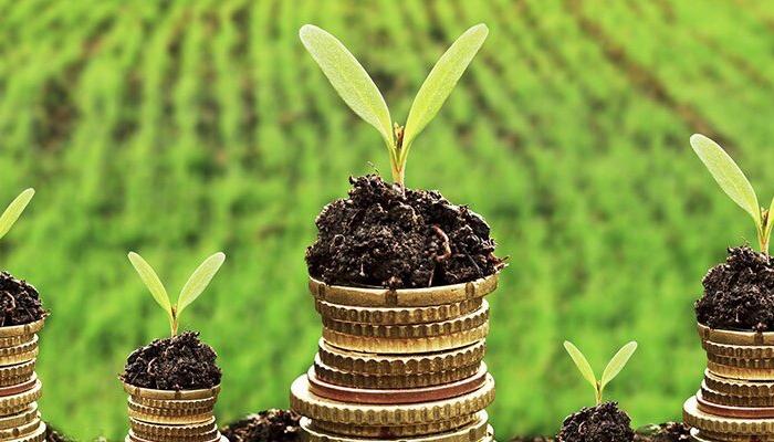 Минсельхоз обещает в новом году направить на господдержку АПК 302 млрд руб