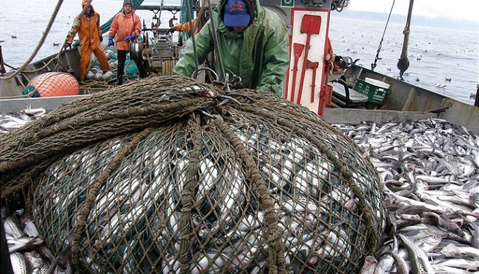 Минсельхоз оценил объем инвестиций врамках рыбных квот в132млрд рублей