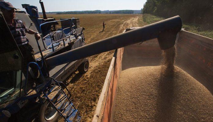 Минсельхоз понизил прогноз по экспорту зерна в 2018-2019 сельхозгоду до 35-37 млн тонн
