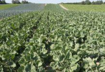 Минсельхозу предложили поощрять предприятия, использующие отечественные овощи