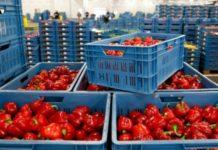 Мировые и российские тренды в переработке плодов и овощей