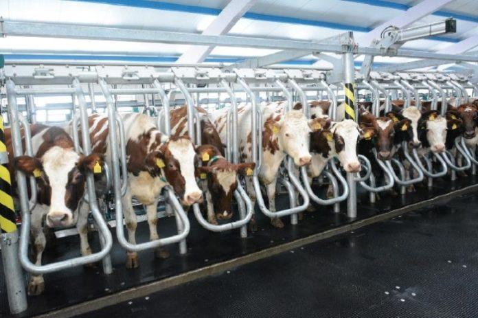 Плазменный реактор повысит экологичность молочных ферм