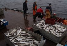 Правительство одобрило запрет нерегулируемого промысла в Северном Ледовитом океане