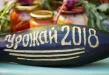 Прогноз по урожаю зерна в России вырос