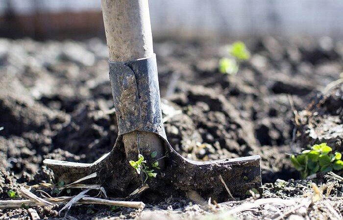 Путин заявил, что необходимо провести аудит неиспользуемых сельхозземель