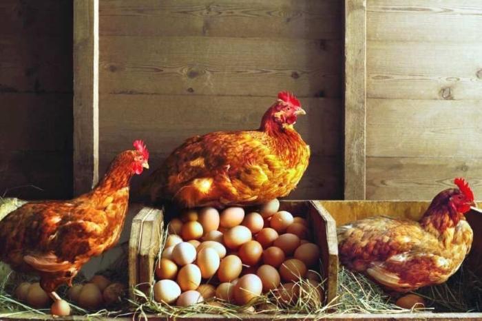 Росптицесоюз прогнозирует: в текущем году будет произведено более 5 млн т мяса птицы в убойном весе