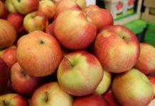Россельхознадзор не пропустил 245 тонн фруктов из Казахстана