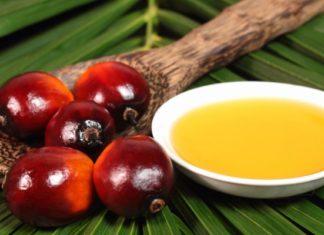 Россия за семь месяцев увеличила импорт пальмового масла на 19%