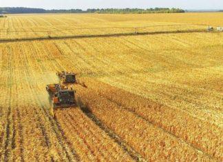 Рост инвесторов в АПК Калужской области привел к нехватке земель для новых ферм