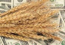 Рынку зерна РФ нужны механизмы, корректирующие влияние экспортных цен на внутренние — глава ОЗК