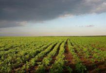 У юридических лиц смогут изъять земли сельхозназначения