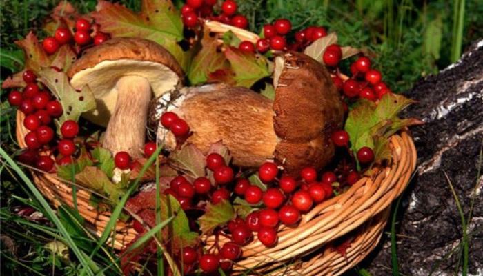 В ГД внесли проект о возрождении контор для приема ягод и грибов