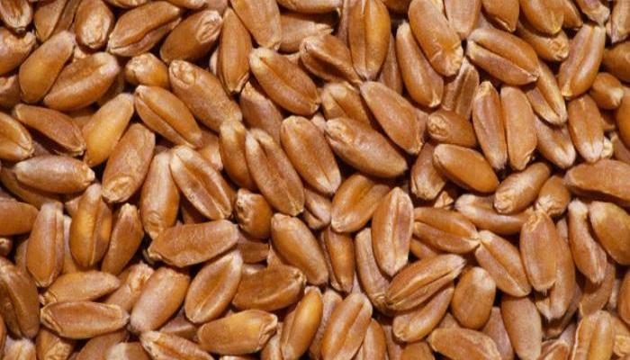 В Китае создан нанокомпозит для предотвращения прорастания пшеничных зерен