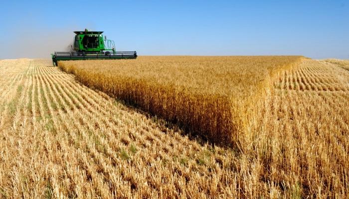 В Ростовской области на субсидии для развития сельского хозяйства выдели 1,6 млрд рублей
