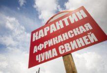 В Ростовской области зарегистрирована новая вспышка африканской чумы свиней