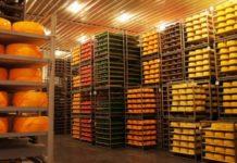 В Тольятти построят завод по производству сыра за 4 миллиарда рублей