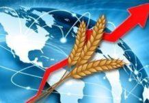 В будущем году ожидается рост аграрного экспорта США