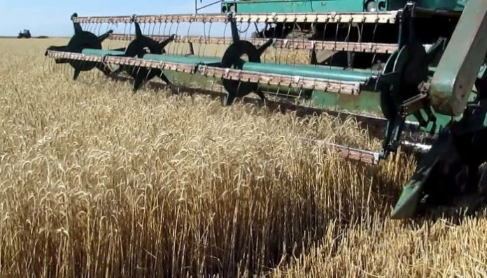 Внутреннее потребление зерна в России - около 78-79 млн тонн