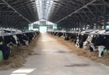 Животноводческий комплекс откроется в Гаврилово-Посадском районе Ивановской области до конца 2019 года