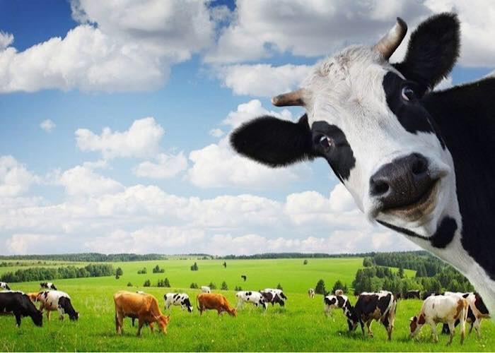 Россельхознадзор и Роспотребнадзор взялись за молочников из-за фальсификата