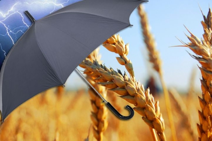 Агрострахование отделяют от единой бюджетной поддержки АПК