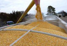 Банк России предложил субсидировать аграриев, торгующих на бирже