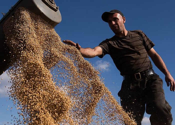 Чиновники подняли цену зерна