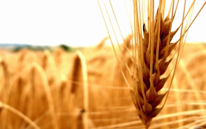 Франция начала принимать меры против продажи российского зерна за границу