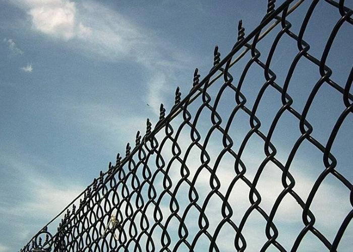 Франция начала возводить электрический забор вдоль границы с Бельгией из-за чумы свиней