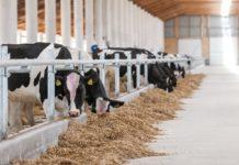 IFCN: количество молочных ферм в мире сократилось на 1%