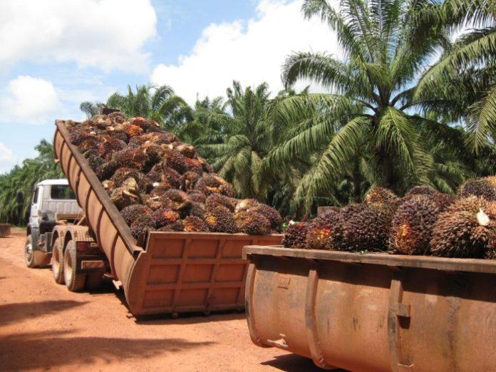 Импорт пальмового масла в РФ в августе вырос более чем в 1,5 раза