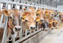 Инвестор из Венгрии построит в Мордовии молочный комплекс