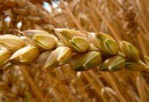 Кабмин выделил 2,47 млрд рублей на обеспечение сохранности госзапасов зерна