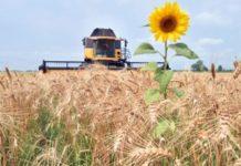Каким в идеале должно быть сельское хозяйство