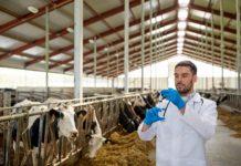 «Калининградская мясная компания» запустила образовательную программу для будущих ветврачей